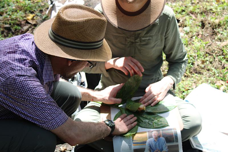 Botanists are exploring Colombia for new and interesting plants (Tiziana Ulian/Mauricio Diazgranados/RBG Kew/PA)
