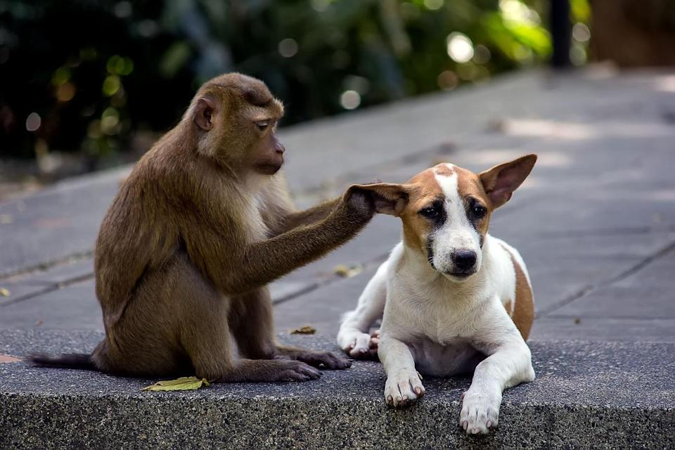 Just be gentle, please. We hope we look this relaxed when hanging out with one of <em>our</em> pals!