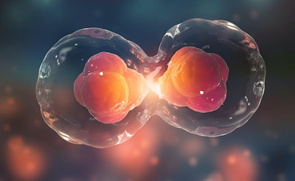 """<span class=""""caption"""">Asexual reproduction can — through cell division, or meiosis — take place without the need for sperm.</span> <span class=""""attribution""""><span class=""""source"""">(Shutterstock)</span></span>"""