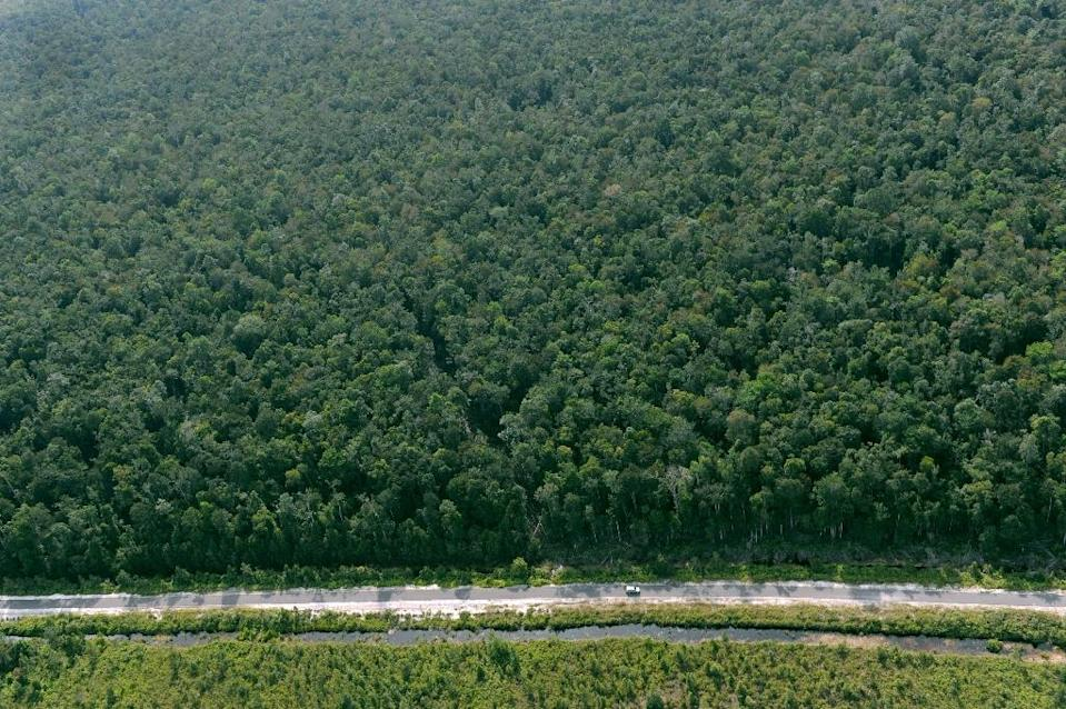 The research, published in the journal Nature, challenges long-standing assumptions that virgin tropical forests untouched by logging or industry do a better job of sopping up carbon dioxide (AFP Photo/Romeo Gacad)