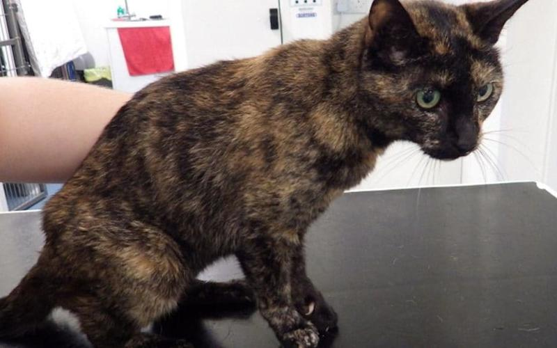 Denise Smith tried to treat Blacky's cancerous leg wound with honey - RSPCA