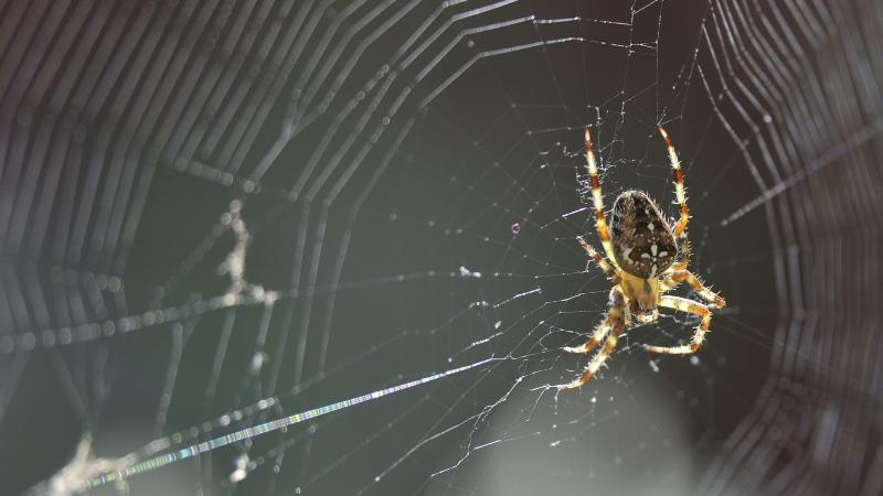 Why spiders invade houses at this time of year