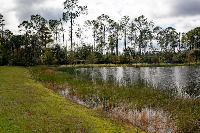 "The pond where Richard Wilbanks rescued his puppy ""Gunner"" from an alligator is pictured, Monday, Nov. 23, 2020,  next to their home in Estero."