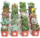 """<p><strong>Shop Succulents</strong></p><p>amazon.com</p><p><strong>$39.56</strong></p><p><a href=""""https://www.amazon.com/dp/B018WLMXG2?tag=syn-yahoo-20&ascsubtag=%5Bartid%7C2141.g.29518657%5Bsrc%7Cyahoo-us"""" rel=""""nofollow noopener"""" target=""""_blank"""" data-ylk=""""slk:Shop Now"""" class=""""link rapid-noclick-resp"""">Shop Now</a></p><p>If she loves plants and flowers (but can't remember to water them!), gift her this collection of mini succulents. They only need to be watered once a week and require partial sunlight.</p>"""