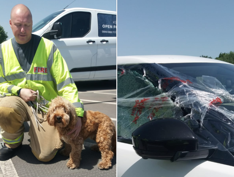 Firefighters rescue dog from car on hottest day of the year (Pictures: Facebook/Saffron Walden Fire Station)