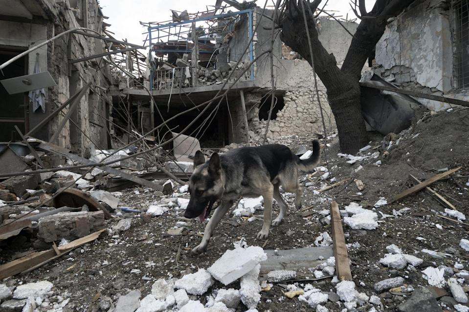 A dog walks in the yard of a house destroyed by shelling by Azerbaijan's artillery during a military conflict in Stepanakert, the separatist region of Nagorno-Karabakh (AP)