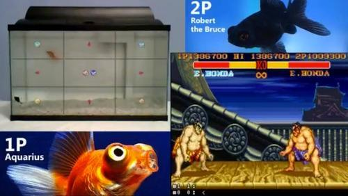 Screenshots from goldfish playing 'Street Fighter II'