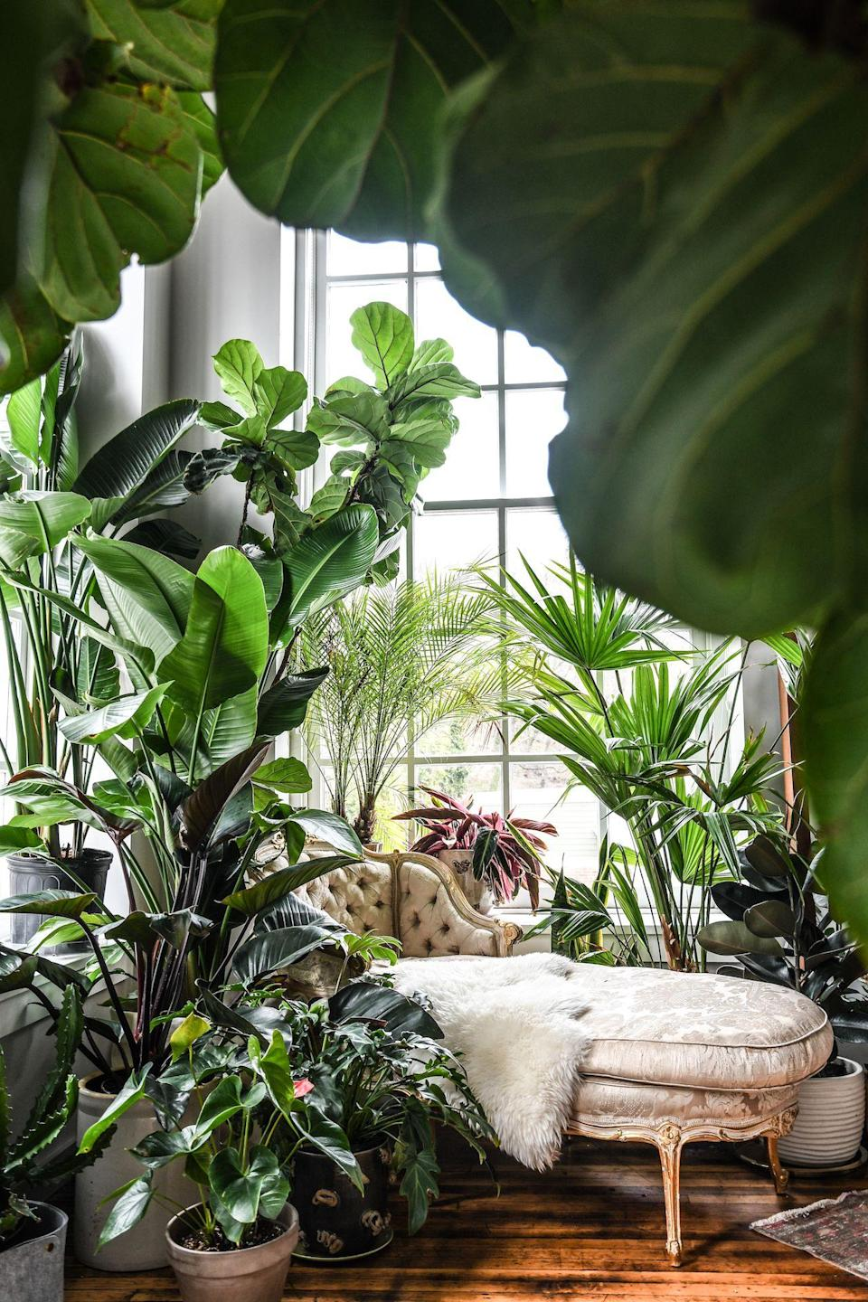 """<p>Living in a small apartment and being a gardening enthusiast were once mutually exclusive. The too-often <a href=""""https://www.elledecor.com/design-decorate/room-ideas/g3464/how-to-brighten-a-dark-room/"""" rel=""""nofollow noopener"""" target=""""_blank"""" data-ylk=""""slk:dark"""" class=""""link rapid-noclick-resp"""">dark</a>, damp, or overly dry environments are not exactly the most ideal for those looking to turn their living room into a makeshift greenhouse. However, this no longer needs to be the case, as there is a wide array of plant species that are actually perfectly suited for surviving—and even thriving—in less-than-tropical conditions. So we at <em>ELLE Decor</em> tapped Baltimore-based plant stylist <a href=""""https://thingsbyhc.com/"""" rel=""""nofollow noopener"""" target=""""_blank"""" data-ylk=""""slk:Hilton Carter"""" class=""""link rapid-noclick-resp"""">Hilton Carter</a>, author of last year's <a href=""""https://www.amazon.com/Wild-Interiors-Beautiful-plants-beautiful/dp/1782498753"""" rel=""""nofollow noopener"""" target=""""_blank"""" data-ylk=""""slk:Wild Interiors"""" class=""""link rapid-noclick-resp""""><em>Wild Interiors</em></a><em>,</em> to recommend the best indoor apartment <a href=""""https://www.elledecor.com/shopping/best-stores/g19574855/buy-plants-online/"""" rel=""""nofollow noopener"""" target=""""_blank"""" data-ylk=""""slk:plants that you can buy online"""" class=""""link rapid-noclick-resp"""">plants that you can buy online</a>, and also to tell you how to care for them once they're all yours. Read on for his top picks, as well as some of our own.<br></p>"""