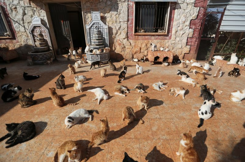 Cats are pictured at Ernesto's sanctuary for cats in Idlib