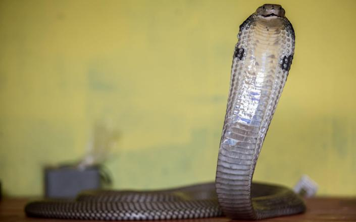 The father lost his sight after he was bitten by a King Cobra snake - Graham Crouch