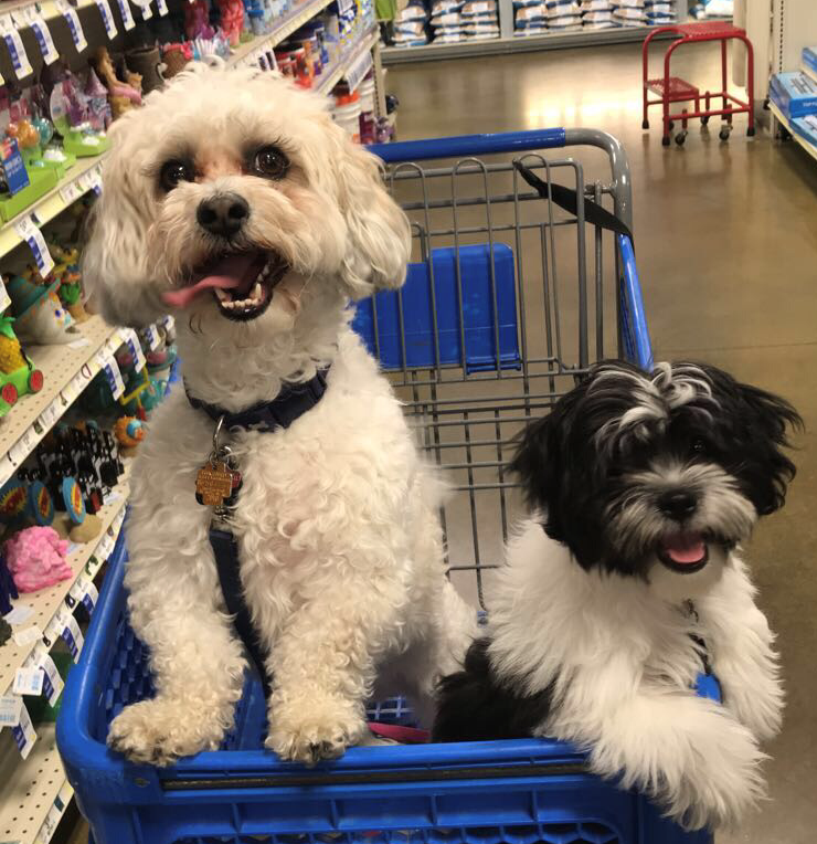 Kirby and Daisy sit in a shopping cart during a trip to Petsmart in July, 2019.