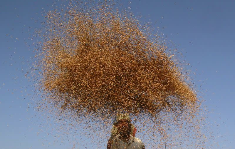World food prices rise for fourth month running, cereal outlook up - U.N.