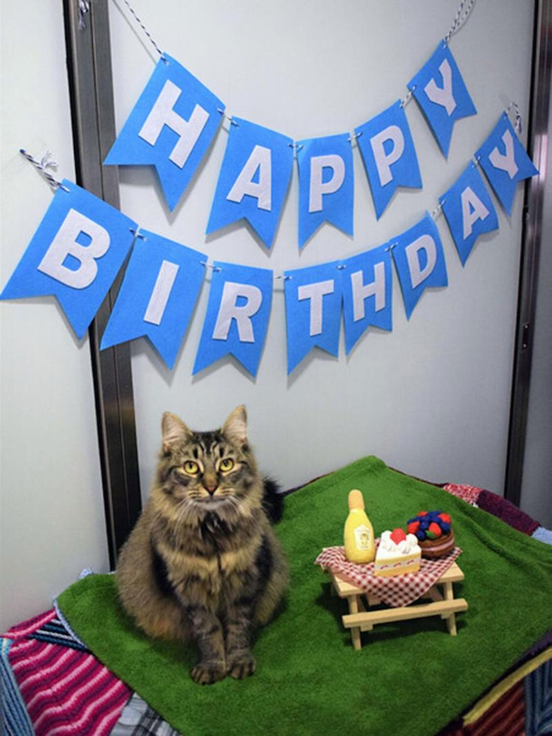 Shelter Cat Still Looking For Forever Home After No One Shows Up To Her Birthday Party