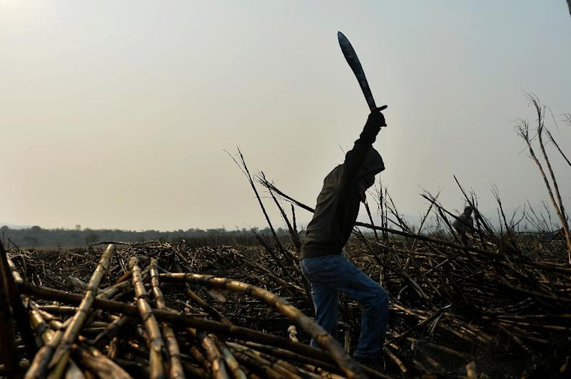 A worker uses a machete to harvest the scorched sugar cane at a plantation in Atencingo, Puebla state (AFP Photo/PEDRO PARDO)