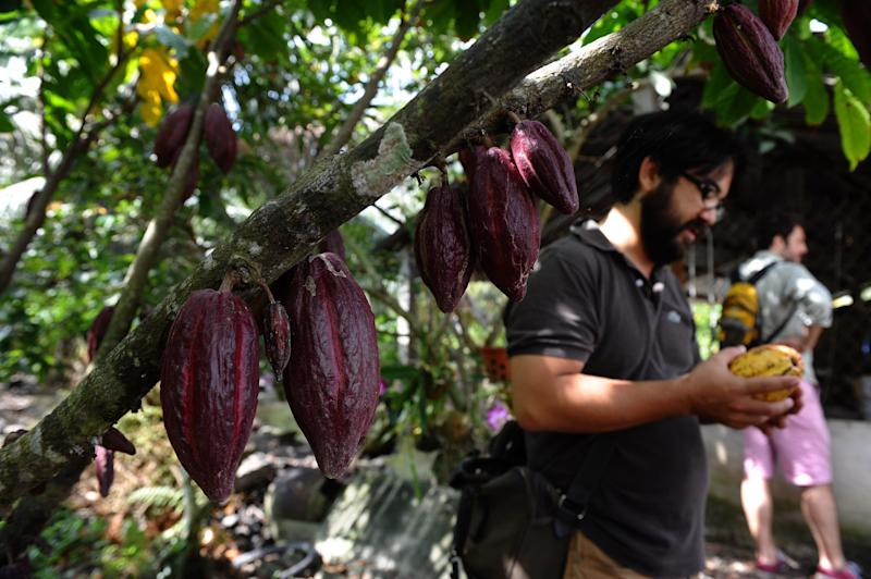 """Vietnamese chocolate has been described as <a href=""""https://www.nytimes.com/2016/03/06/t-magazine/food/marou-vietnamese-chocolate.html"""" target=""""_blank"""" rel=""""noopener noreferrer"""">""""unlike any other.""""</a>&nbsp;Tourists with a sweet tooth can explore the offerings from <a href=""""https://marouchocolate.com/"""" target=""""_blank"""" rel=""""noopener noreferrer"""">Marou</a> or <a href=""""http://www.azzan.vn/"""" target=""""_blank"""" rel=""""noopener noreferrer"""">Azzan</a>, which both <a href=""""https://damecacao.com/tour-cocoa-plantation-vietnam/"""" target=""""_blank"""" rel=""""noopener noreferrer"""">offer tours</a>."""