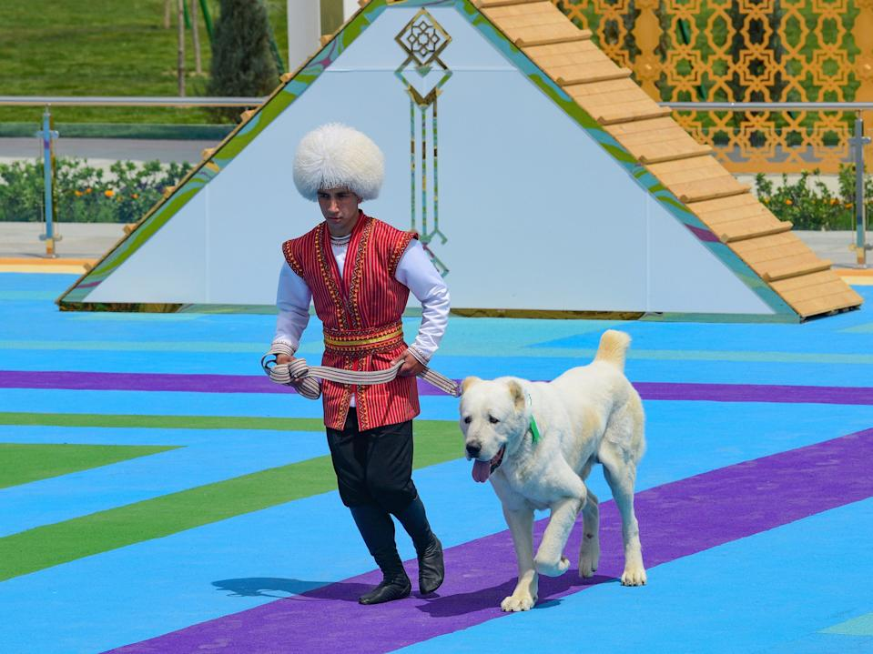 A man dressed in a national costume runs with his border guard shepherd dog Alabay during Dog Day celebration in Ashgabat, Turkmenistan (AP)