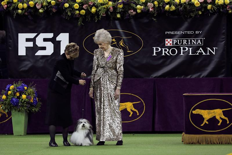 "A judge examines ""Oeste's in the Name of Love,"" a Havanese who won the toy group at the 143rd Westminster Kennel Club Dog show at Madison Square Garden in New York, Feb. 11, 2019. (Photo: Caitlin Ochs/Reuters)"