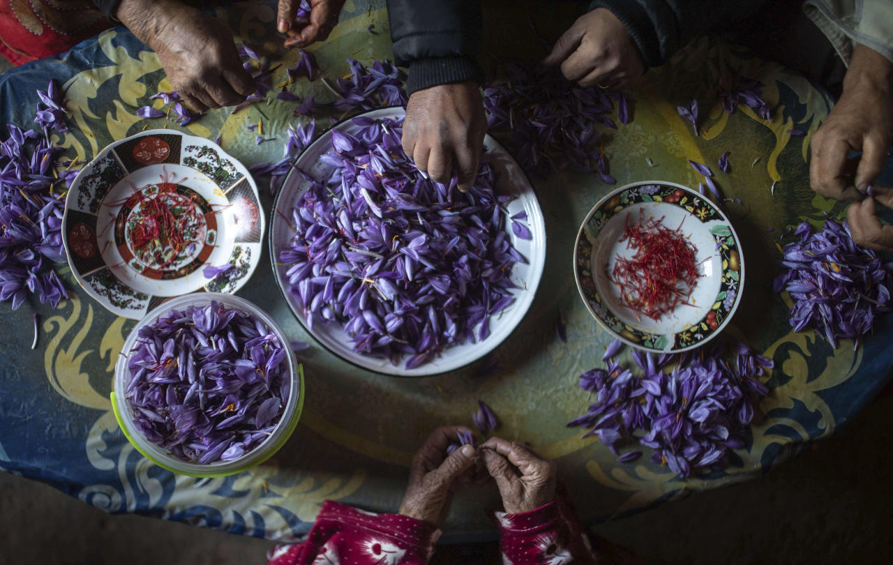 In this Tuesday, Nov. 5, 2019 photo, a family separates Saffron stigma from petals shortly after harvesting during harvest season in Askaoun, a small village near Taliouine, in Morocco's Middle Atlas Mountains. The saffron plants bloom for only two weeks a year and the flowers, each containing three crimson stigmas, become useless if they blossom, putting pressure on the women to work quickly and steadily. (AP Photo/Mosa'ab Elshamy)