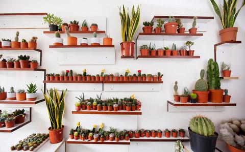 Gynelle Leon's Cacti boutique called 'Prick' - Credit:  Rii Schroer