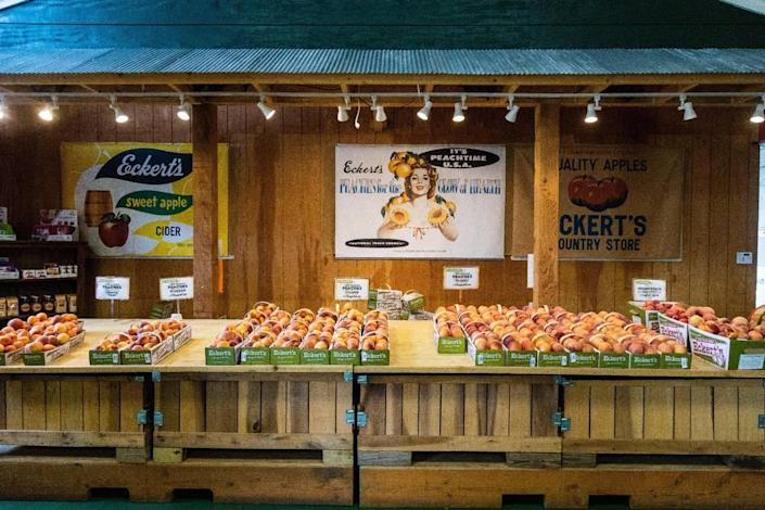 Don't feel like picking? The Country Store at Eckert's Orchard in Versailles has plenty of fresh peaches for visitors to purchase, July 29, 2021. This was Eckert's Orchard's first year the peach orchard had produced fruit after planting them in 2018.