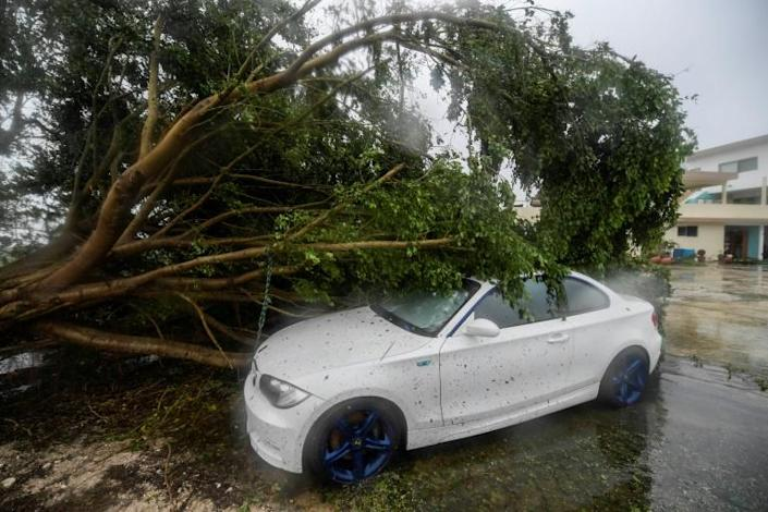 Several cars were damaged by trees uprooted by the storm in Cancun
