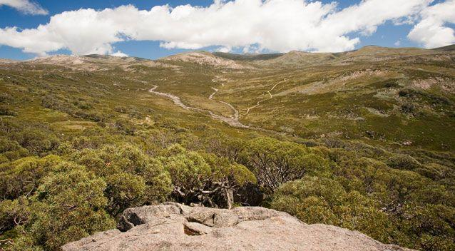 Emergency services are responding to reports a helicopter has crashed in Kosciuszko National Park. Photo: Getty
