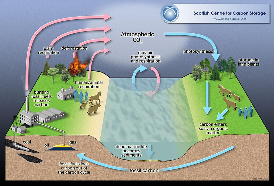 Carbon cycle photosynthesis deforestation atmosphere