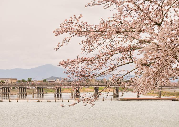 """Scenery selected as one of the """"100 Best Cherry Blossom Spots"""""""