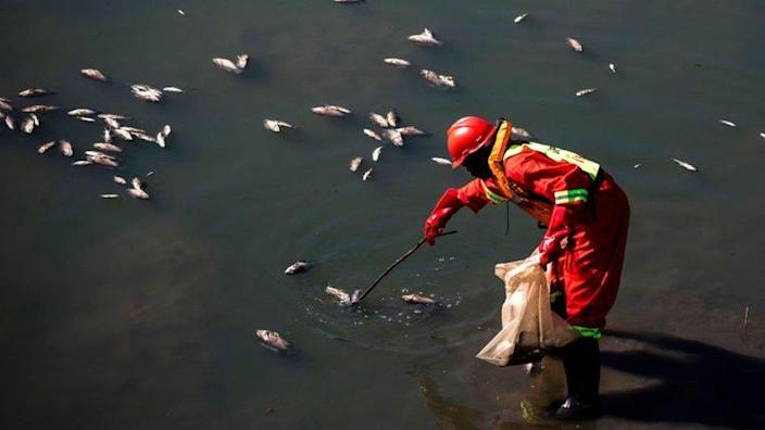 A member of a spill cleaning crew removes dead fish from the river in the uMhlanga Lagoon Nature Reserve in Durban on July 18, 2021.