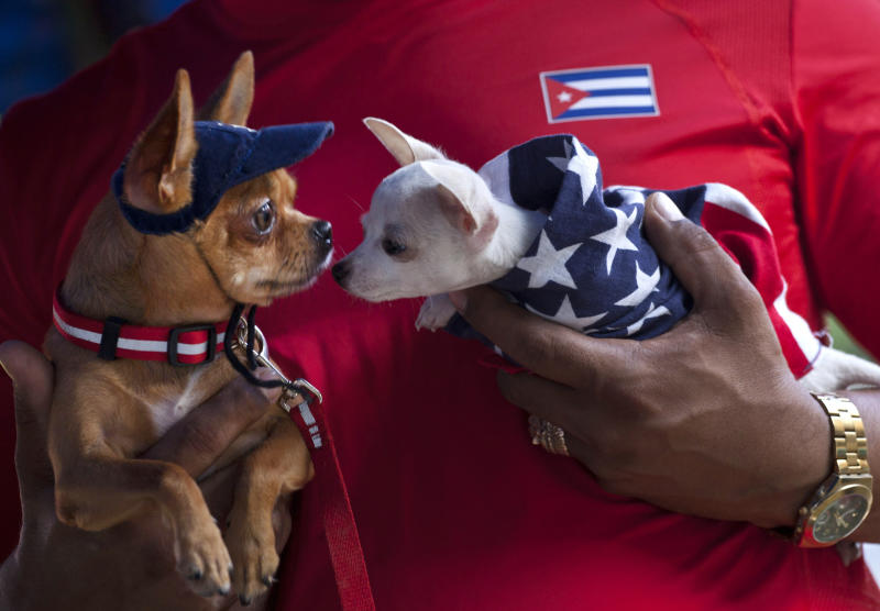 In this Nov. 25, 2012 photo, a man holds two chihuahua dogs, one dressed in a U.S. flag, at the Fall Canine Expo in Havana, Cuba. Hundreds of people from all over Cuba and several other countries came for the four-day competition to show off their shih tzus, beagles, schnauzers and cocker spaniels that are the annual Fall Canine Expo's star attractions. (AP Photo/Ramon Espinosa)