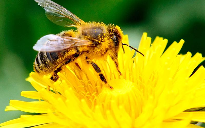 The use of neonicotinoids for most outdoor farming was banned to protect bee populations