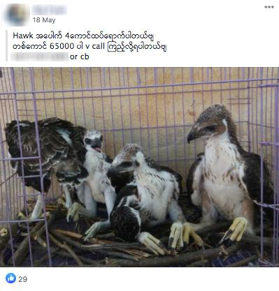 Facebook purges ads for illegal wildlife in Southeast Asia as online trade surges