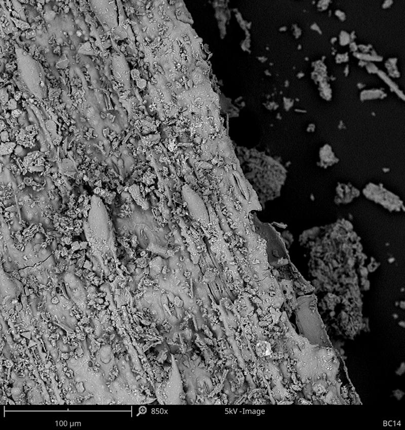 A microscopic image of a 200,000-year-old grass fragment showing prickles and stomata