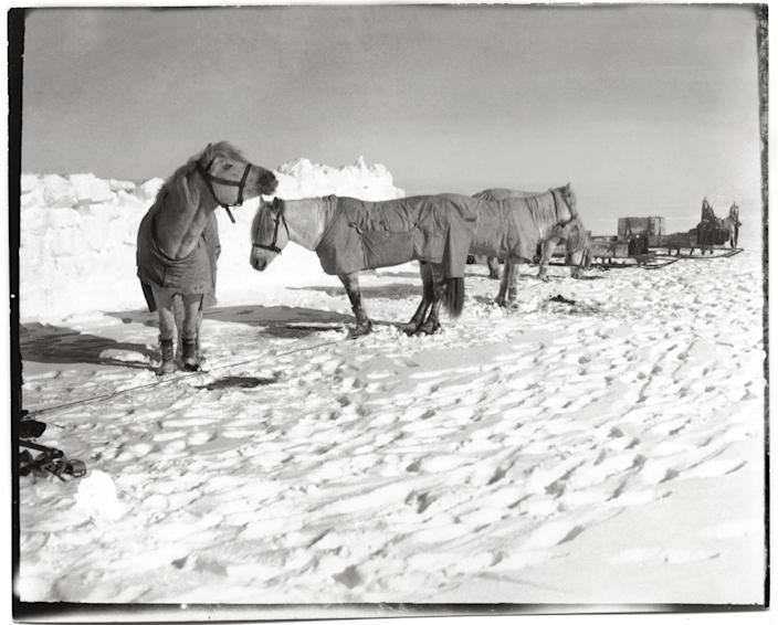 """Pony camp, Camp 15, (left to right) Snippetts, Nobby, Michael and Jimmy Pigg, Great Ice Barrier, 19 November, 1911.<br><br>(Photo credit: ©2011 Richard Kossow)<br><br>For more information on """"The Lost Photographs of Captain Scott"""" and where to buy the book, visit <a href=""""http://www.hachettebookgroup.com/books_9780316178501.htm"""" rel=""""nofollow noopener"""" target=""""_blank"""" data-ylk=""""slk:hachettebookgroup.com"""" class=""""link rapid-noclick-resp"""">hachettebookgroup.com</a>"""