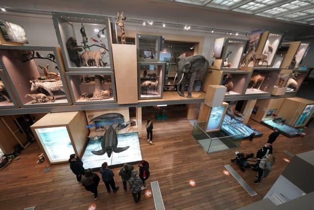 People inside Great North Museum in Newcastle (Owen Humphreys/PA)