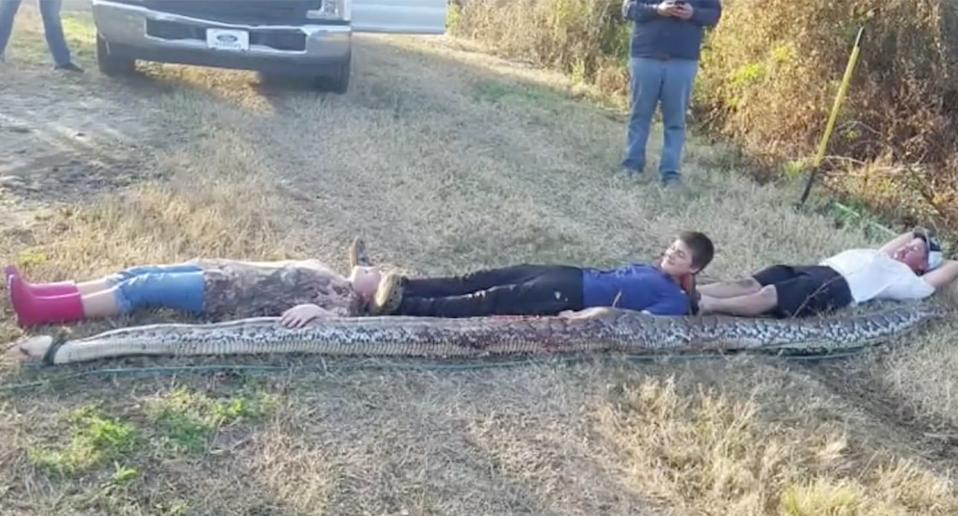 Three people lie out to show the length of the snake.