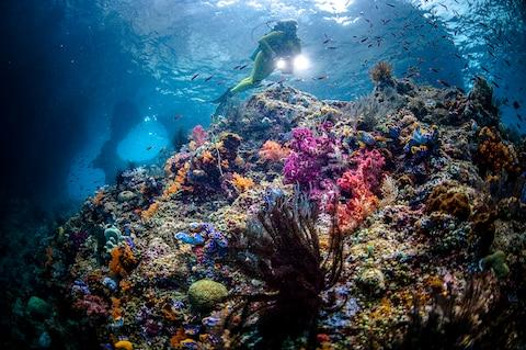 Raja Ampat is said to contain the most biodiverse marine habitat on the planet - Credit: GETTY