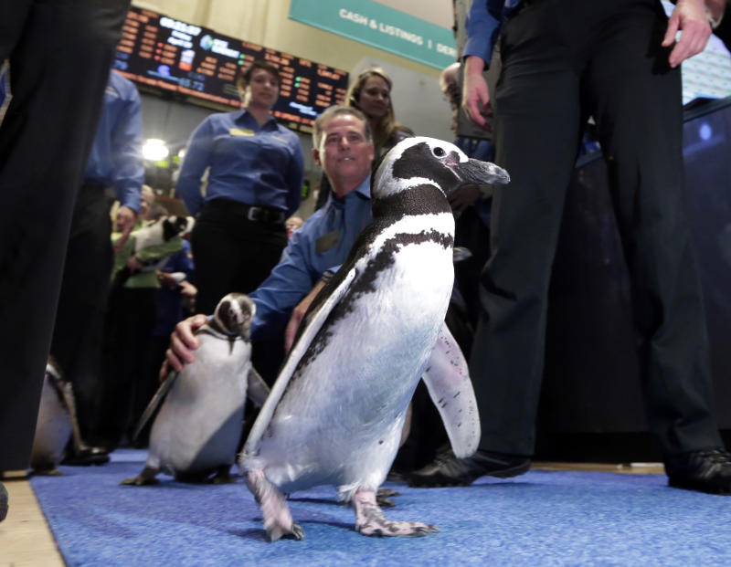 SeaWorld makes a splash on NYSE as stock gains