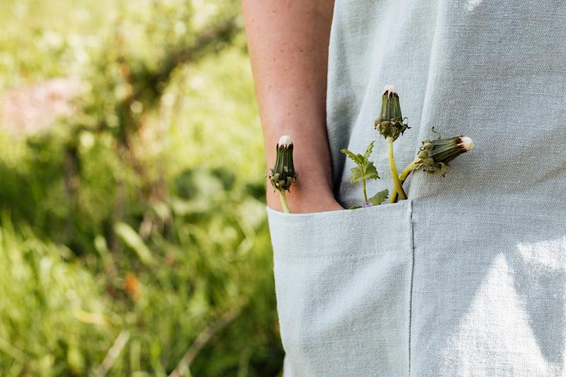 In the pocket of a linen apron a woman's hand with dandelions.