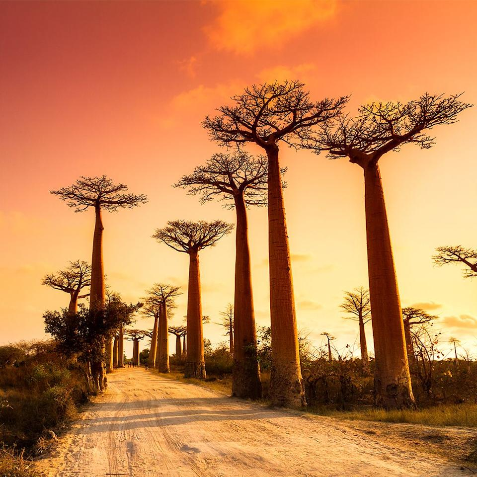 "<p>For those seeking a ""still relatively off the radar"" escape, look no further than wild and virtually unexplored Madagascar. This thriving hotspot of biodiversity is a dream for naturalists and adventurers alike; the island is teeming with endemic wildlife, 80% of which can be found nowhere else on Earth. </p><p>Unknown to most, Madagascar has some of the best beaches in the Indian Ocean. Check out Nosy Be, Madagascar's most scenic coastal spot, where guests can spot humpback whales and lemurs on the shoreline.Located on the north-eastern coast of the island, <a href=""https://www.blacktomato.com/us/destinations/madagascar/miavana-nosy-ankao/"">Miavana</a> is the perfect private escape. With only 14 private villas, staying at this luxurious eco-lodge will feel as though you've stumbled upon your own Robinson Crusoe haven. Think days exploring lush tropical rainforests and watching turtles nest on the deserted white sand beaches.</p>"