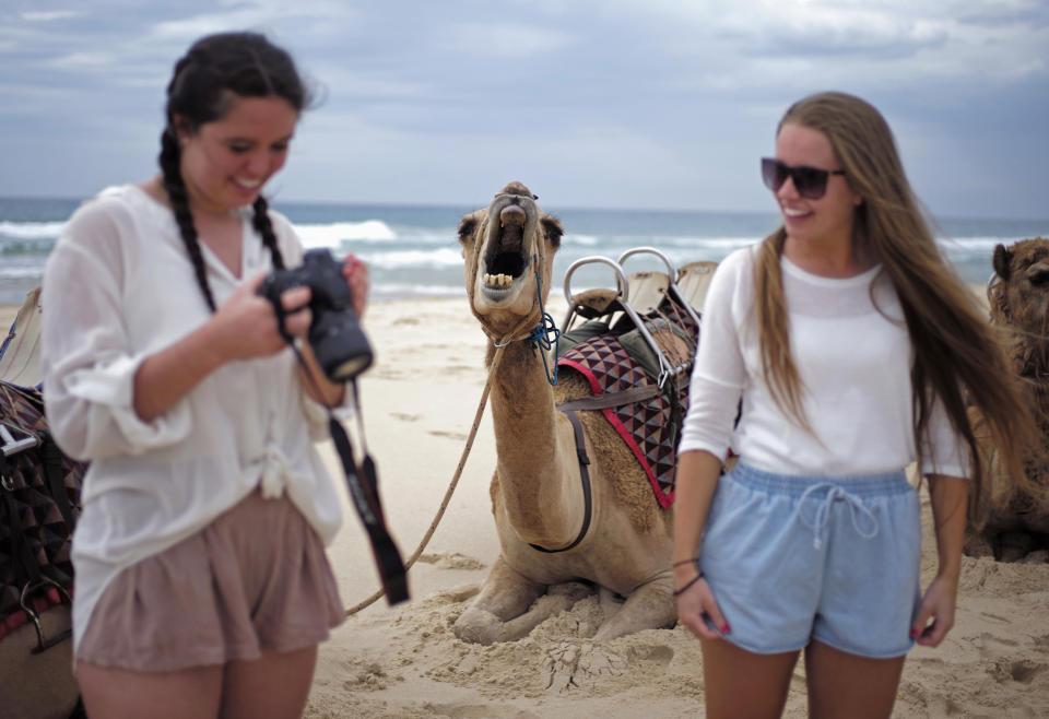 A camel yawns as a tourist checks images on her camera following a ride on a camel safari alongside the Pacific Ocean on Lighthouse Beach, north of Sydney, December 4, 2014. (REUTERS/Jason Reed)