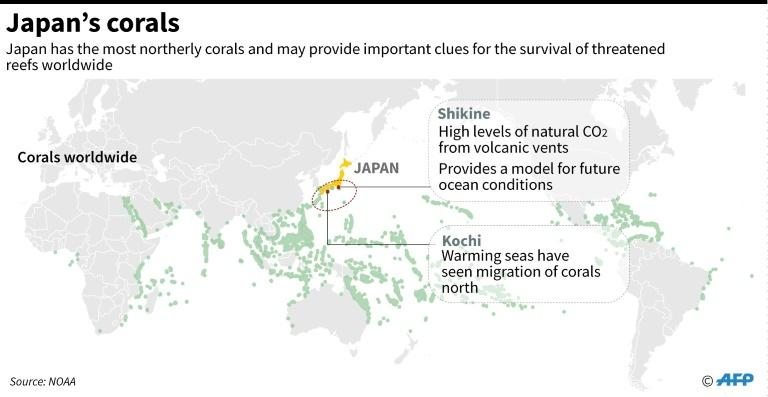 Graphic highlighting Japan's corals, which scientists say can provide important clues for the survival of threatened reefs worldwide