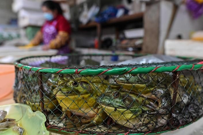 Frogs for sale at a wet market in Shanghai on April 29, 2020.