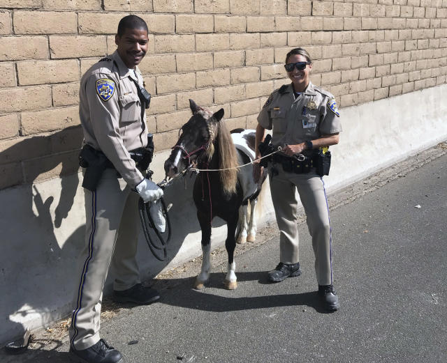 In this Sept. 29, 2019 photo provided by California Highway Patrol, Santa Fe Springs, CHP officers Rico Lawson, left, and Jacqueline Sicara stand along the side of the freeway with a pony after it went loose and was struck by a hit-and-run driver on a Los Angeles-area freeway, leaving the small horse slightly injured. (CHP Santa Fe Springs via AP)