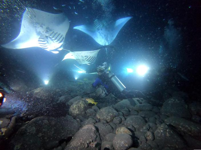 Jack & # x002019; s Diving Locker on the Big Island offers the opportunity to swim with manta rays at night.