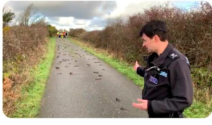"Mystified investigators were left ""scratching their heads"" after finding scores of bloodied starlings in the lane (PA)"