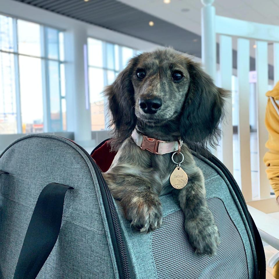 Emily Padgett said she pays about $120 each way to bring her dog, Jolene, on a flight.