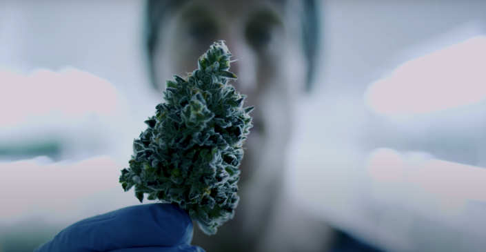 A worker at Aphria's Broken Coast subsidiary holds a cannabis bud. (Aphria/YouTube)