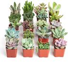 """<p><strong>Shop Succulents</strong></p><p>amazon.com</p><p><strong>$37.62</strong></p><p><a href=""""https://www.amazon.com/dp/B018WLMXG2?tag=syn-yahoo-20&ascsubtag=%5Bartid%7C10049.g.8274845%5Bsrc%7Cyahoo-us"""" rel=""""nofollow noopener"""" target=""""_blank"""" data-ylk=""""slk:Shop Now"""" class=""""link rapid-noclick-resp"""">Shop Now</a></p><p>Succulents are such an easy way to be a plant owner without all the stress and hard work that's so often involved in keeping other types of plants alive. And she'll love to decorate her space with all 20 (!!) of these bbs. </p>"""