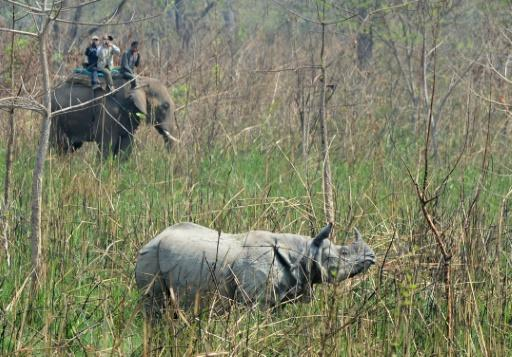 Nashorn in Nepals Chitwan Nationalpark
